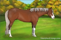 Horse Color:Silver Brown Sabino