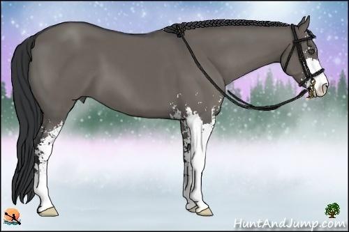 Horse Color:Grullo Sabino