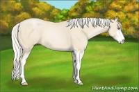 Horse Color:Silver Smokey Black Pearl Sabino