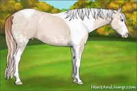 Horse Color:Smokey Black Ice Pearl Splash Tobiano
