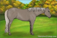 Horse Color:Silver Grullo
