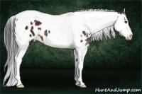 Horse Color:White Spotted Bay Splash Tobiano Appaloosa