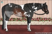 Horse Color:White Spotted Brown Tobiano