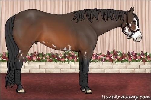 Horse Color:Brown Splash Frame