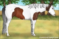 Horse Color:Bay Splash Tobiano