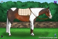 Horse Color:Brown Splash Tobiano