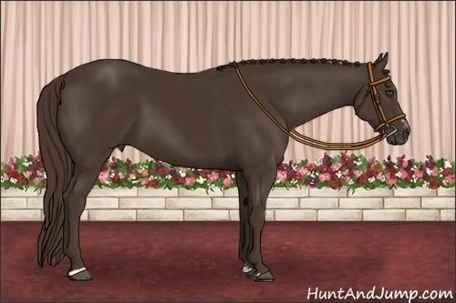 Horse Color:Liver Chestnut Sabino