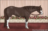 Horse Color:Liver Chestnut Sabino