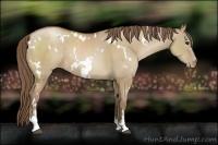 Horse Color:White Spotted Grullo Pearl Sabino