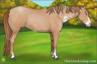 Horse Color:Bay Pearl Sabino