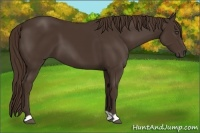 Horse Color:Liver Chestnut