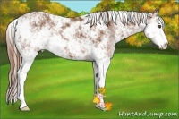 Horse Color:Chestnut Sabino