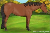 Horse Color:Bay Sabino