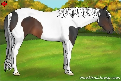 Horse Color:Brown Tobiano