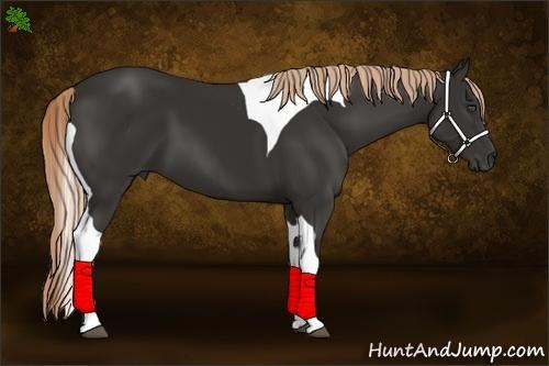 Horse Color:Liver Chestnut Tobiano Frame
