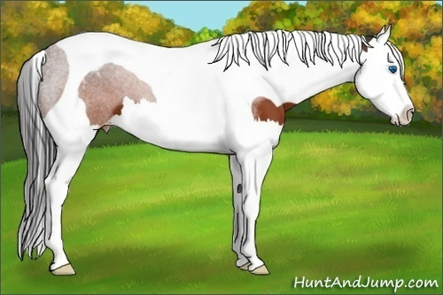Horse Color:Brown Sabino Splash Tobiano Appaloosa