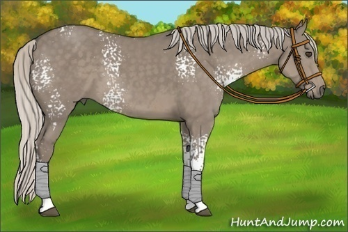 Horse Color:White Spotted Silver Smokey Grullo