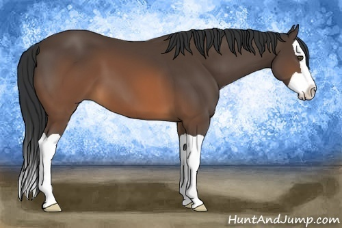 Horse Color:Brown Splash
