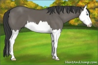 Horse Color:Grullo Sabino Splash