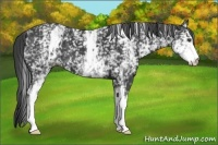 Horse Color:White Spotted Smokey Black