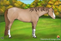 Horse Color:Brown Pearl Sabino Splash