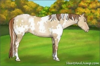 Horse Color:White Spotted Red Dun Pearl