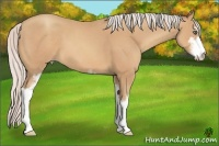 Horse Color:Silver Sable Champagne Sabino