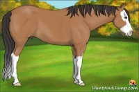 Horse Color:Bay Sabino Splash