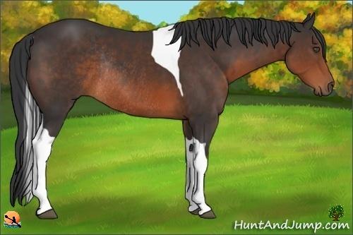 Horse Color:Brown Tobiano Rabicano