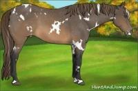 Horse Color:White Spotted Buckskin Appaloosa
