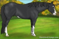 Horse Color:Black Sabino