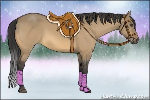 Horse Color:Buckskin Dun