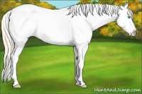 Horse Color:White Spotted Perlino Dun Appaloosa