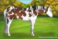 Horse Color:White Spotted Bay Splash