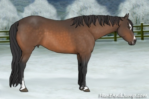 Horse Color:Buckskin Sabino
