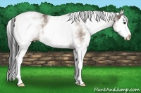 Horse Color:White Spotted Buckskin Splash