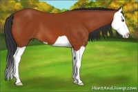 Horse Color:Bay Splash