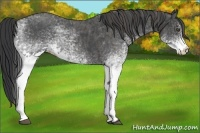 Horse Color:White Spotted Blue Roan Rabicano  Brindle