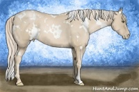 Horse Color:White Spotted Palomino Pearl Frame