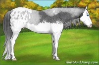Horse Color:White Spotted Blue Roan Splash Appaloosa