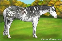 Horse Color:Black Sabino Splash