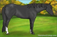 Horse Color:Smokey Black Tobiano