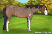 Horse Color:Bay Roan Sabino