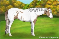 Horse Color:Black Pearl Splash Tobiano Frame Rabicano  Brindle