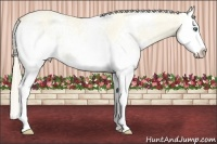 Horse Color:White Spotted Perlino Dun Splash