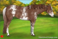 Horse Color:White Spotted Chestnut Sabino