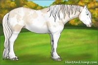 Horse Color:White Spotted Palomino Pearl Dun Splash