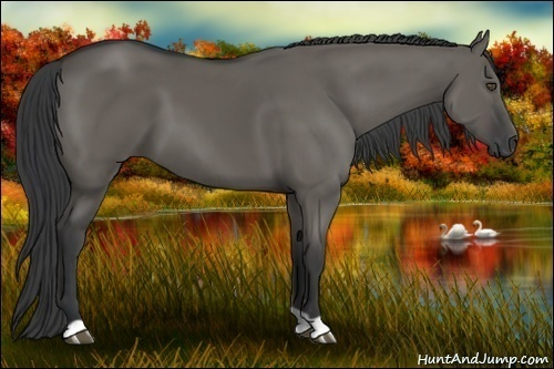 Horse Color:Grullo