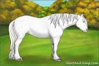 Horse Color:Smokey Creme Appaloosa