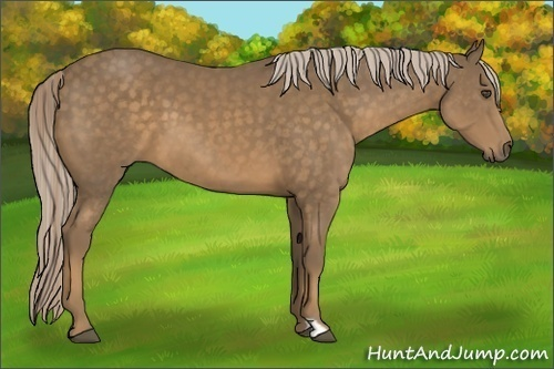 Horse Color:Chocolate Palomino Frame